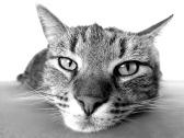 cat-98359_1920