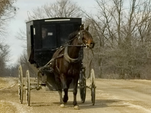 Mennonite_and_carriage_publ