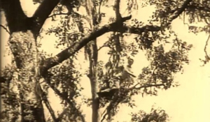 Texas Tarzan swings from a tree like the movies