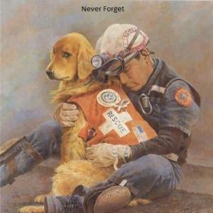 rescuedog1-911