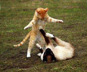 cats fight argue