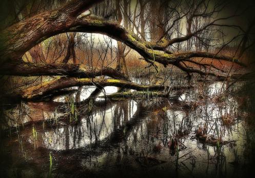 swamp-2323715_1280